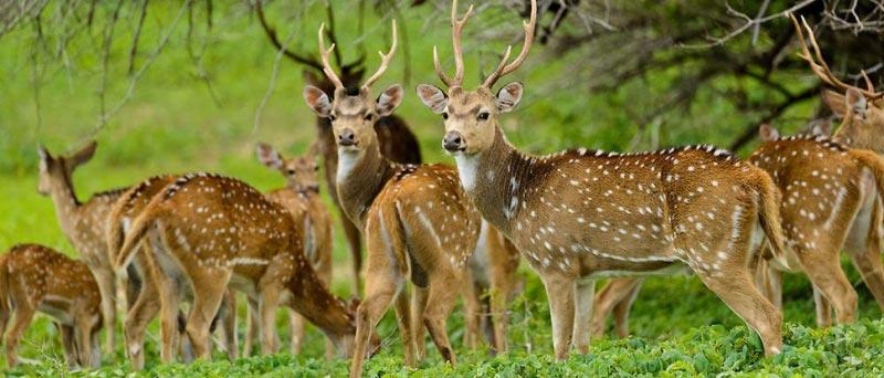 Great Indian Wildlife Tour