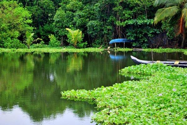 Backwaters Of Kerala Tour