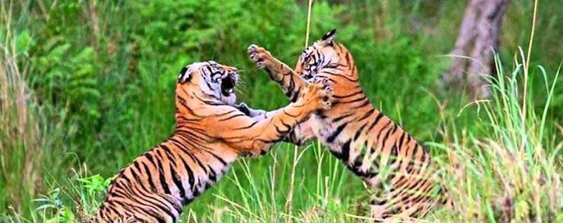 Luxury Wildlife Tour Delhi
