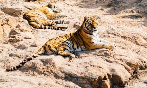 Jabalpur Bhedaghat,kanha,Bandhavgarh Tour