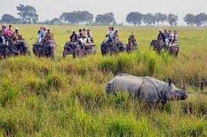 The Rhino Land (Kaziranga 2N - Guwahati 1N) Tour