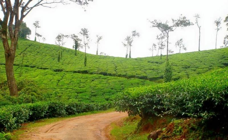 Banglore With Coorg Tour