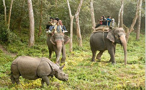 India Nepal Jungle Lodges Wildlife Tour