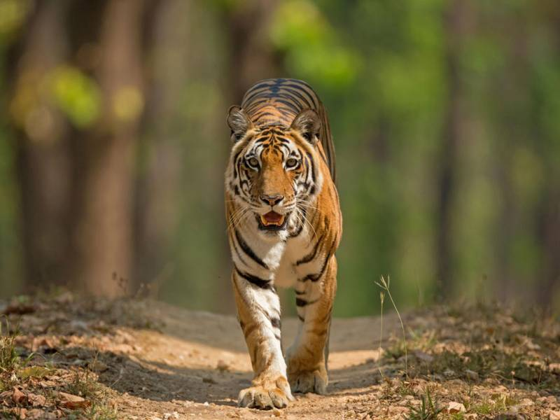 Wildlife Tours In India Tour