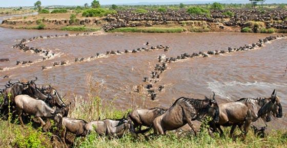 7 Days/6Nights Giraffe Manor, Sweetwaters Sanctuary, Nakurumasai Mara Safari Luxury Safari Iti Tour