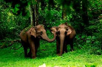 Wayanad & Kabini From Bangalore