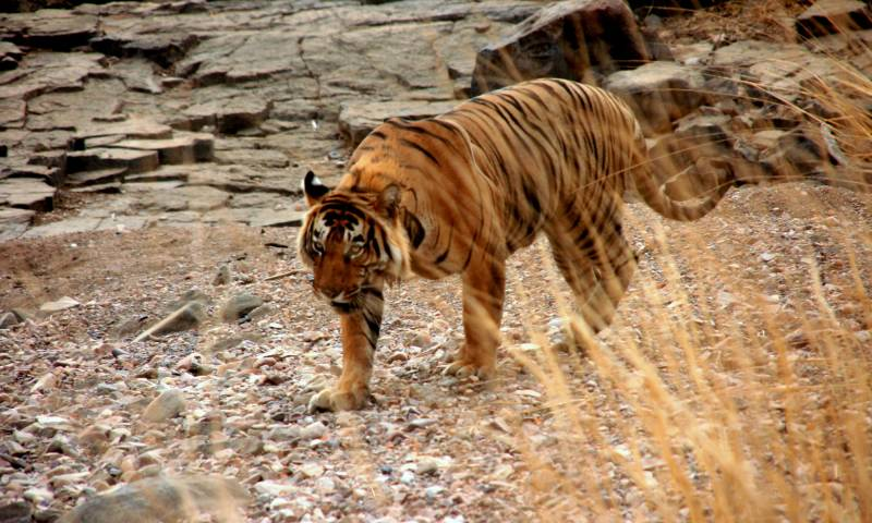 Golden Triangle With Wildlife Tour Package