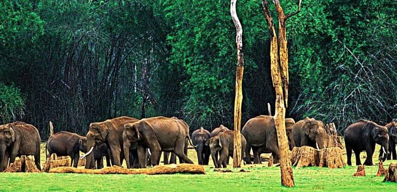 Kerala Wildlife Tour Package