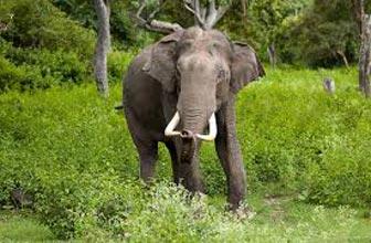Bandipur National Park Tour