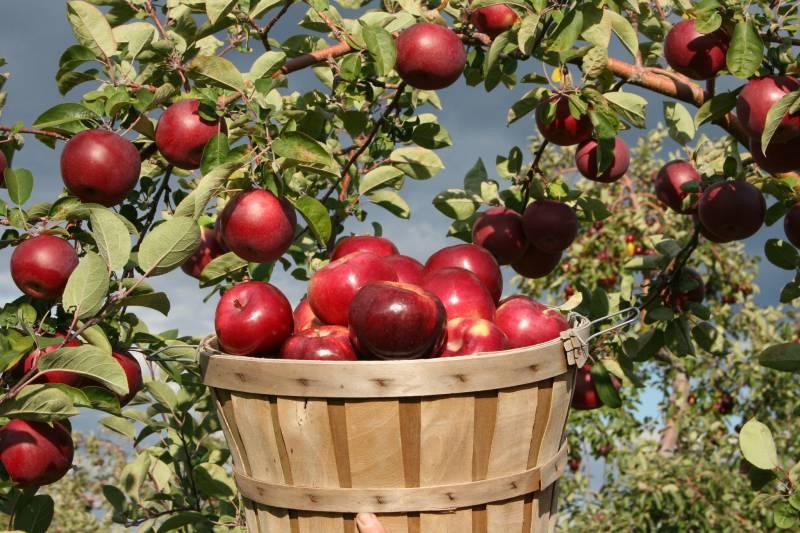 Fruit Orchard Tour