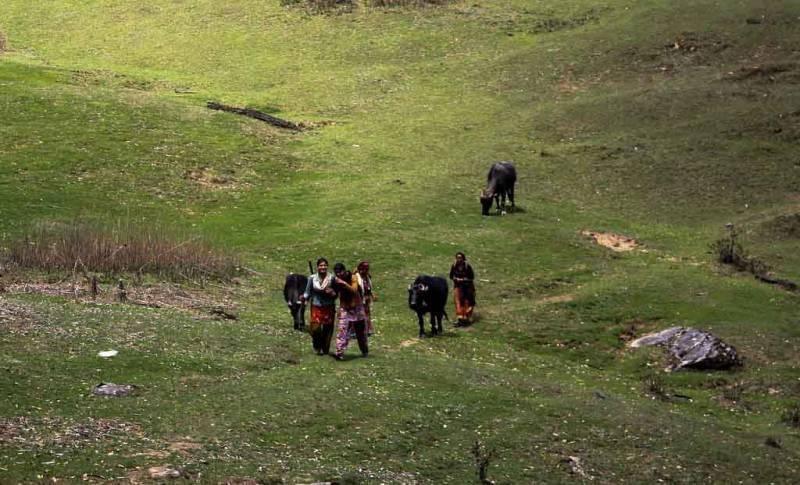 Dayara Bugyal Trek Tour
