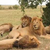 Short Escape To Gir Tour Package