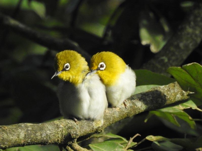 Pangot Birding 2nights/3days Tour