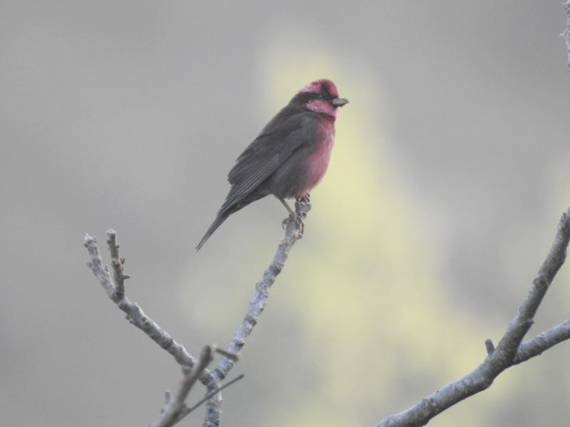 Nandhaur Wildlife And Naina Devi Birding Tour