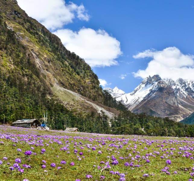 Gangtok-lachung-yumthang-darjeeling Tour