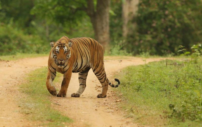 Short Escape To Kabini Tour