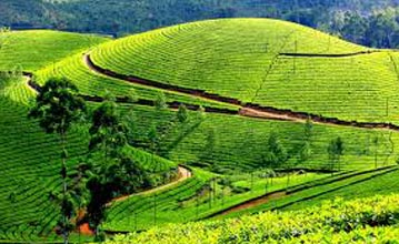 2 D / 1 N Tour To Munnar ( Hill Station) From Thrissur / Kochi