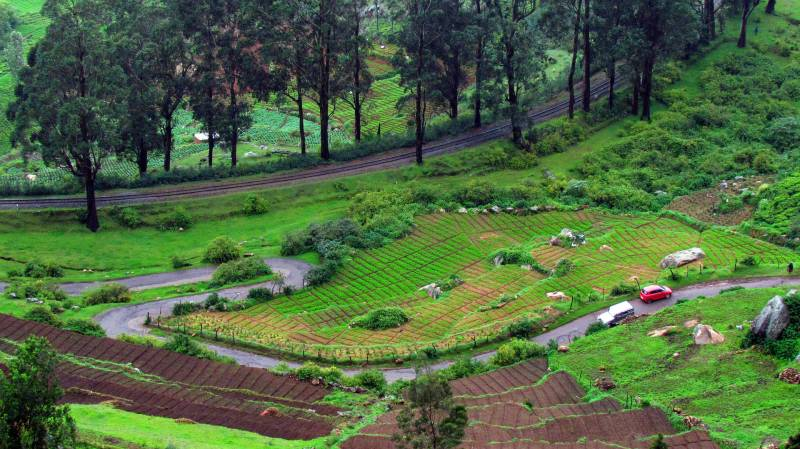 Coorg – Ooty Tour