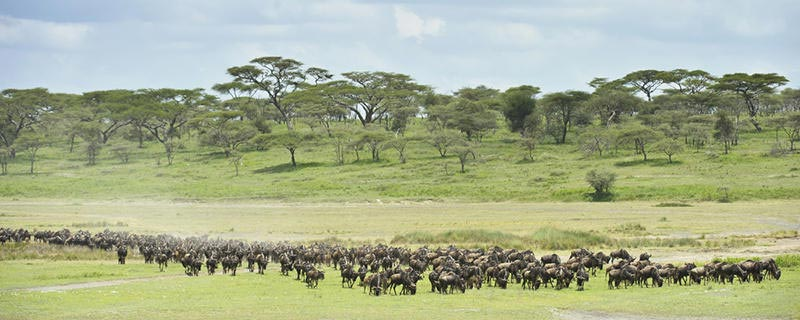 Africa Magical Safaris Tour