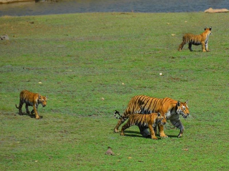 Tadoba Nagzira And Pench National Park Tour