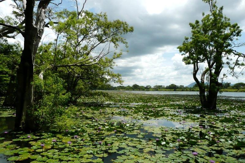 Sri Lanka Wildlife Tour - 10 Days