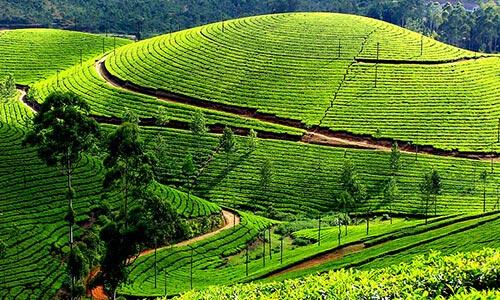 Kerala Economy Tour