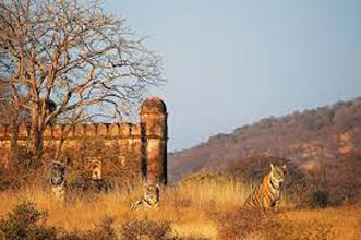 Royal Rajasthan 15 Nights And 16 Days Tour