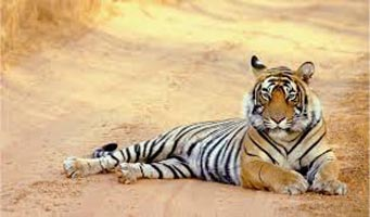 13 Day North India Rajasthan + Tigers Tour