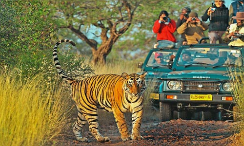Golden Triangle Tour With Tiger Safai