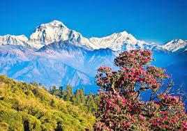 Nepal 6 Nights / 7 Days Tour