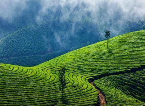 Mesmerizing Munnar, House Boat Cruise Tour