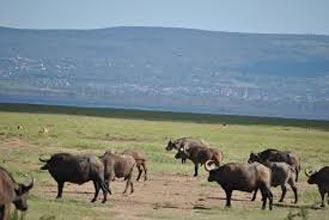 Maasai Mara-L.Nakuru-Samburu-Aberdare Tour