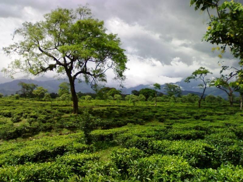 Guwahati, Balipara, Bhalukpong, Nameri, Kaziranga, Gibbon, Sibsagar, Dibrugarh Tour Package