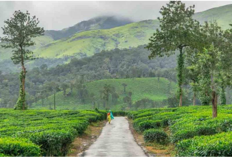 Cochin-Wayanad-Ooty 4 Night 5 Days Tour Package