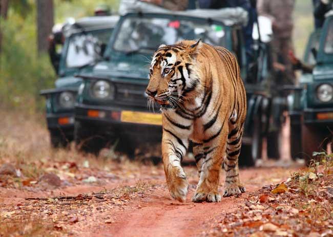 Jaipur Bharatpur Jaipur Weekend 2 Night 3 Days