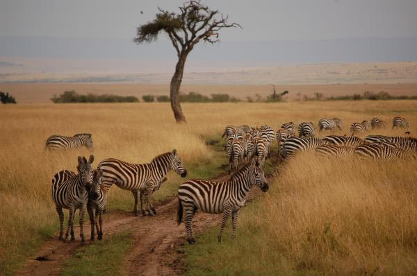Best Of Kenya 4 Days Mara/Nakuru Tour