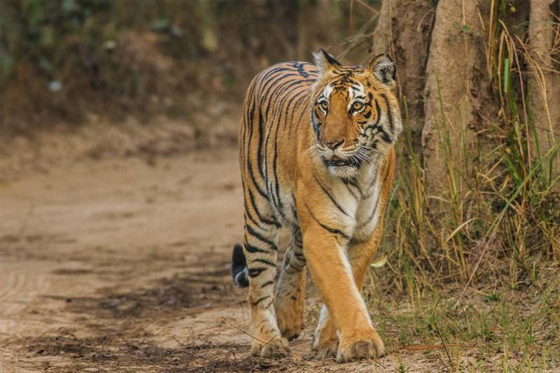 North & Central India Tiger Tour