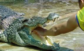 Crocodile And Bird Watching Trip