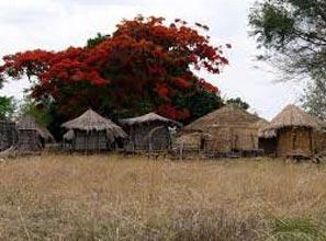 Safari: Best Of Zambia Basic Tour