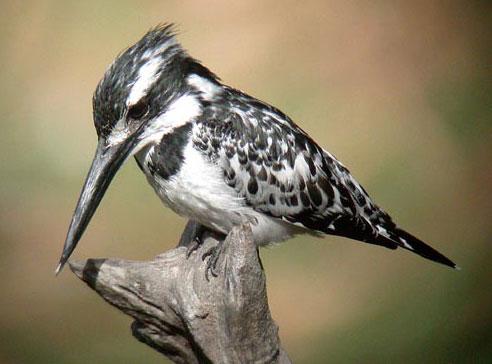 Sundarban Birding Tour