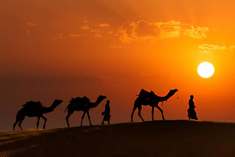Safari To Amazing Rajasthan Tour