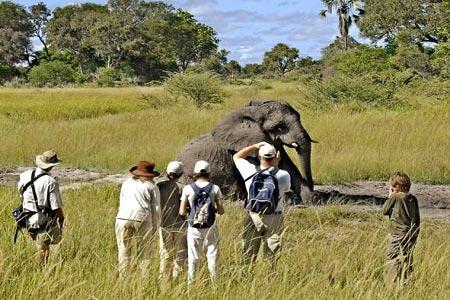 5 Nights Okavango Delta Tour