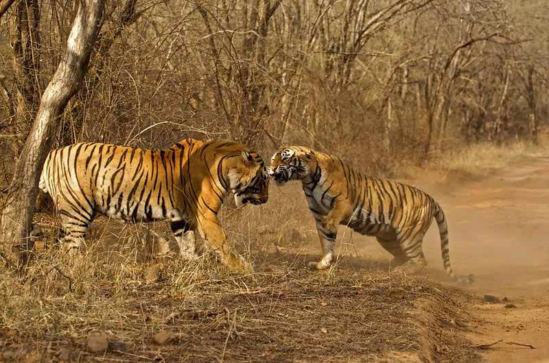 Rajasthan 5 Days Tour For Couple & Family