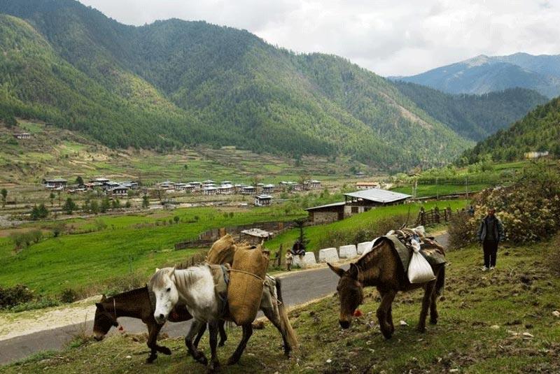 Package 4. Bhutan Package