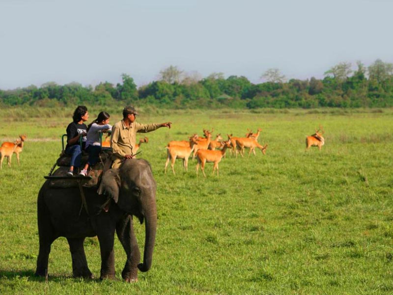 Exclusive Kaziranga Shillong Tour