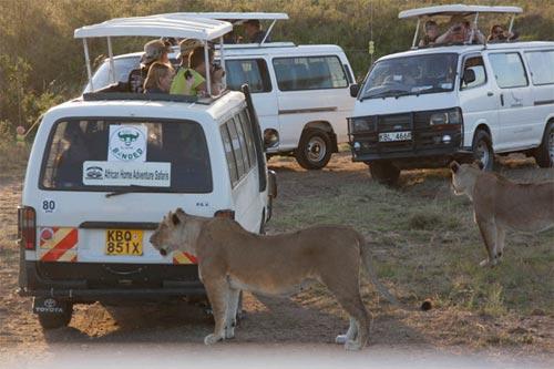 3 Nights 4 Days Masai Mara And Lake Nakuru Safari Tour
