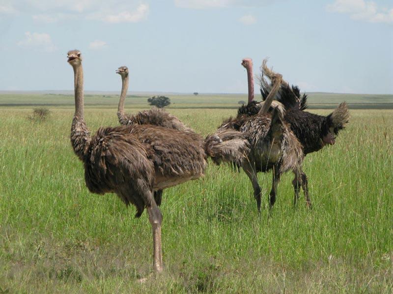 4-Day Tarangire, Ngorongoro Crater, Serengeti Tour