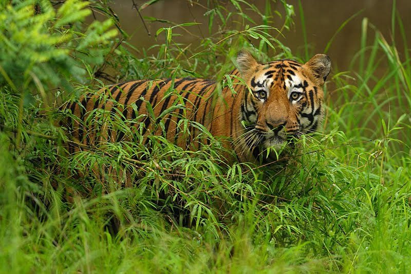 Maharashtra Wildlife Tour 95065 Holdiay Packages To