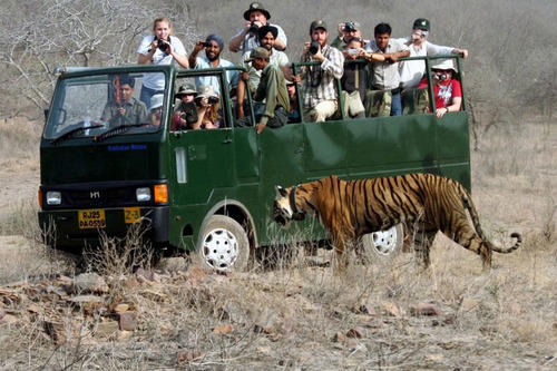Dhikala Tiger Safari Tour