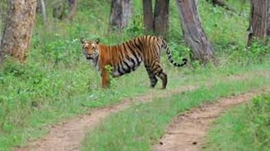 Short Escape To Bandipur National Park Tour